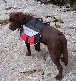 Top Paw Easy Fit Dog Harness Review