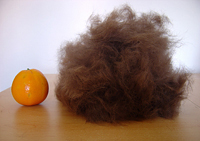 Fur removed using a FURminator