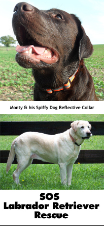 Spiffy Dog High Visibility Collar