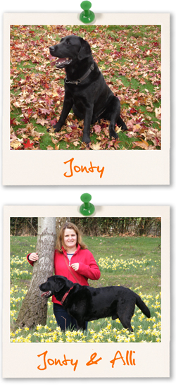 Labrador Retriever of the week - Jonty