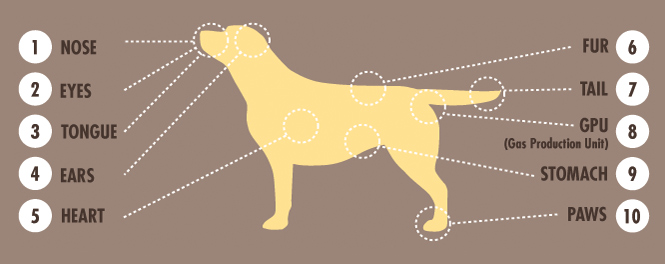 The alternative anatomy of a Labrador Retriever