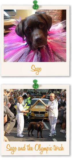 Labrador Retriever of the week - Sage