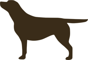 Labrador silhouette decal